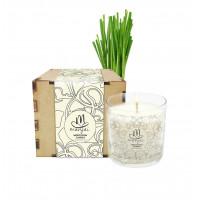 Meditation Candle in Box - Lemongrass